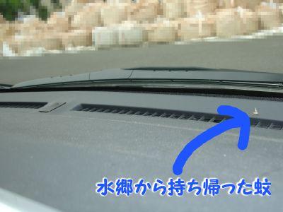 みんなの車にも蚊の死骸あるでしょ?.jpg